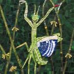 Pyari Cau - Praying Mantis Dancing in the Grass